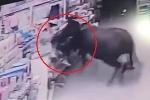 Clip: Trâu 'điên' sổng lò mổ, lao ra đường húc nhiều người bị thương