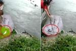 Clip: Cá nhảy tanh tách khỏi hồ nước, dân đua nhau mang ô ra hứng