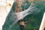 Mở thùng thư, tá hỏa thấy nhện 'khủng' cùng hàng trăm nhện con lúc nhúc