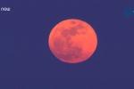 Video: Mãn nhãn ngắm 'Siêu trăng xanh máu' 150 năm mới có 1 lần