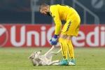 Chó chạy vào sân đùa nghịch với thủ môn