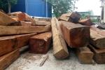 Gia Lai xử lý trách nhiệm tập thể, cá nhân để xảy ra phá rừng
