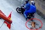 Clip: Cẩu tặc đi xe máy quăng thòng lọng trộm chó trong 1 nốt nhạc