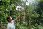 Chuyện lạ quanh khu rừng thiêng có tên 'Rừng Đại Tướng' trên đường hành quân lên Điện Biên Phủ