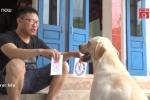 Clip: Chú chó Củ Cải có biệt tài làm toán, nhớ tên đội bóng gây bão mạng