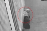 Clip: Đạo chích dùng 'Súc Cốt Công' chui qua cửa cuốn đóng kín, trộm vàng như phim
