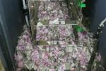Video: Chuột lẻn vào ATM, gặm tan nát hơn 400 triệu đồng