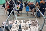 Dân mang ruồi đến bủa vây nhà máy xử lý rác ở Hà Tĩnh