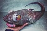 Ảnh: Bộ sưu tầm các sinh vật đại dương 'có 1 không 2' của ngư dân Nga
