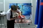 Dịch vụ spa cho thú cưng đắt đỏ vẫn tấp nập ngày Tết