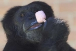 Quá nóng, động vật trong các vườn thú ở Colombia được cho ăn kem