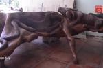 Chiếc bàn 12 con giáp làm từ rễ cây 'siêu độc' ở miền Tây