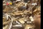 Rùng mình lời thú nhận của chủ cơ sở sản xuất cá khô 'ngậm' thuốc trừ sâu