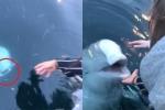 Clip: Kinh ngạc cá voi trắng trả lại iPhone bị rơi xuống biển cho cô gái