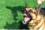 Em bé chết khi chữa chó dại cắn bằng thuốc nam: Không xử lý được 'lang băm'?