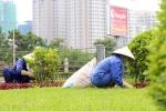 Hà Nội chi hàng chục tỷ đồng mỗi năm để... cắt cỏ, tỉa hoa