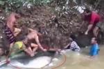 Clip: Dân hò nhau giải cứu cá trê khổng lồ nặng 200 kg mắc cạn