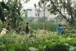 Phát hiện thi thể đang phân hủy trong bụi cây ở Hà Nội