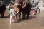 Thót tim clip voi nổi điên dùng ngà hất bay người cô gái trẻ