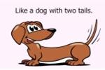 Thành ngữ tiếng Anh với từ 'chó'