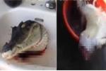 Cắt lìa thân, cá sấu vẫn há miệng đớp điên cuồng