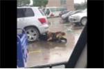 Chó hung tợn tấn công, người đàn ông chui xuống gầm ô tô vẫn không thoát nạn