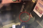 Clip: Tè bậy lên bảng điều khiển thang máy, bé trai lĩnh cái kết đắng