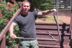 Tá hỏa phát hiện rắn nâu cực độc đang lột xác trong vườn nhà