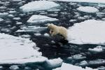 Băng ở Bắc Cực đang tan tốc độ báo động, có thể tan hết vào năm 2030