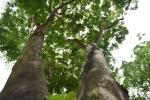Thi công tuyến Metro ở Hà Nội: Di dời, chặt hạ 171 cây xanh