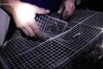 Video: Người Long An bẫy chuột đồng mùa lũ kiếm 400.000 đồng mỗi đêm