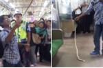 Cảnh sát lặng người nhìn hành khách tay không quật chết rắn trên tàu điện