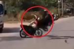 Clip: Loạt tai nạn rùng mình khi 'ma men' cầm lái