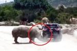 Clip: Tê giác hung hãn tấn công xe ô tô gia đình trong công viên
