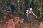 Hành trình xâm nhập đại công trường khai thác gỗ trái phép ở Đắk Lắk
