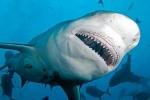 Bị cá mập tấn công, một người ở Pháp thiệt mạng