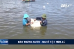 Video: Xem dân miền Tây kéo trứng nước mùa lũ kiếm tiền triệu mỗi ngày