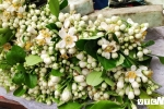 Gánh hàng rong bán hoa bưởi, kiếm vài triệu đồng/ngày