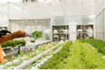 Video: Trang trại trồng rau tự động hoàn toàn bằng robot đầu tiên trên thế giới
