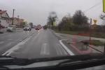 Chú chó thông minh biết chờ xe dừng, qua đường đúng vạch