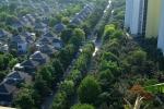 Nho cay xanh, nhiet do tai Ecopark thap hon Ha Noi toi 4 do C hinh anh 6