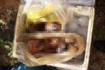 Phát hiện 3 cá thể khỉ bị giết, ướp đông lạnh