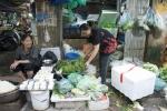 Rau xanh tăng giá chóng mặt, rau thì là đắt hơn thịt cá