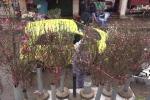 Video: Còn lâu mới đến Tết nhưng hoa đào đã xuống phố Hà Nội, cành đắt nhất 1,2 triệu đồng