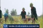 Clip: Lúa Thái Bình 'chết đuối' hàng vạn héc-ta