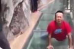 Video: Trai tráng khóc 'hết nước mắt' khi đi qua cầu đáy kính