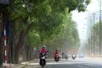 Chủ tịch Hà Nội lý giải việc phải chặt hạ, di dời hơn 1.300 cây xanh