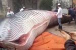 Doanh nghiệp Trung Quốc gây sốc khi xẻ thịt cá voi 8 tấn làm thức ăn cho chó