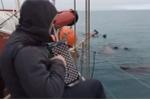 Video: Kinh ngạc những con hải mã lắc lư, kêu theo tiếng đàn trên biển
