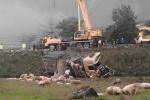 Xe tải lao xuống ruộng, hàng trăm con lợn phi ra ngoài